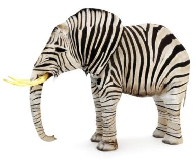 Elephant-Zèbre